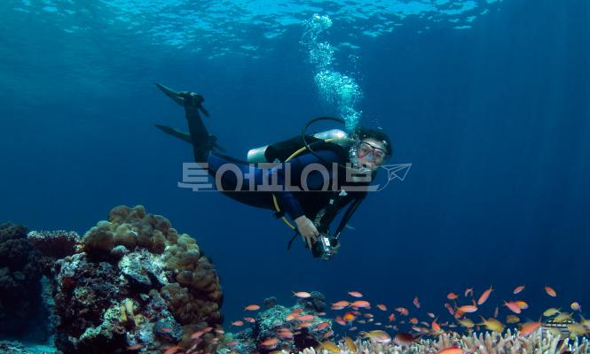[세부 액티비티 & 데이투어] 스킨 스쿠버 다이빙 - 체험다이빙 (2시간 + 수중 촬영)