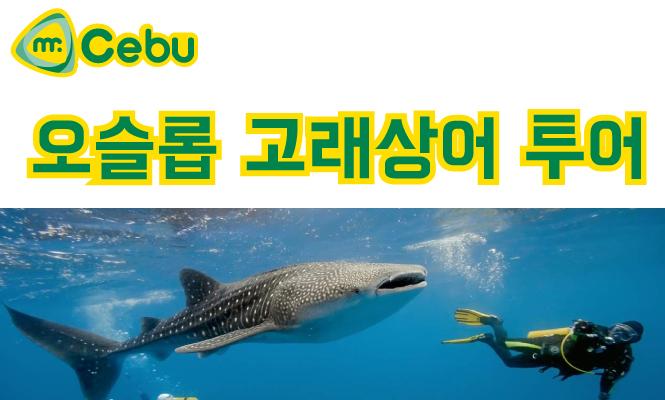 [조인투어] 세부 오슬롭 고래상어 투어(고래상어+투말록폭포+오슬롭성당)