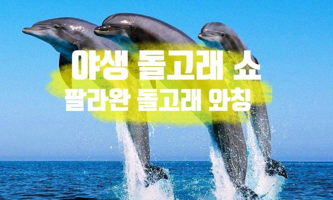 [팔라완 데이투어] 야생 돌고래 투어(돌핀 와칭 투어) - 반나절/조인